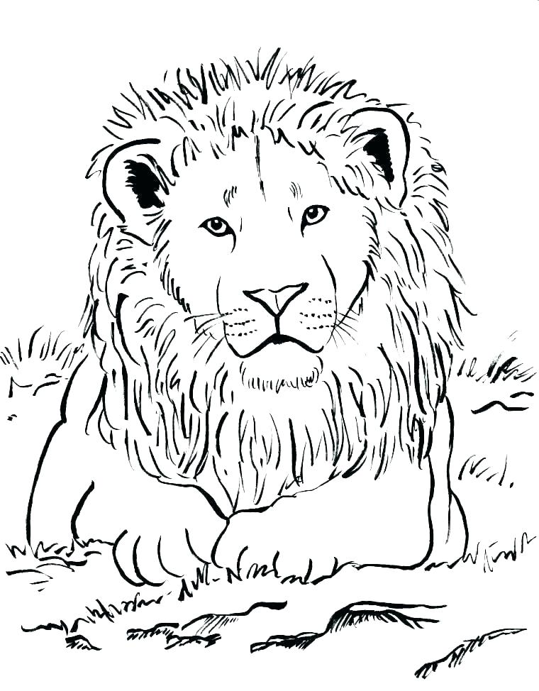 lion face coloring page dopravnisystem