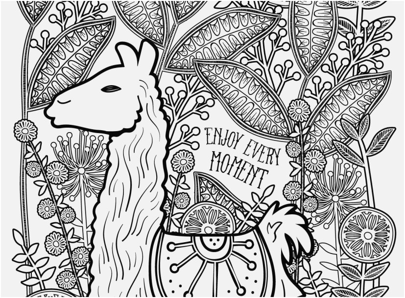 llama coloring pages portraits llama free and printable
