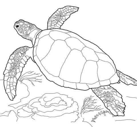 loggerhead sea turtle coloring page free printable