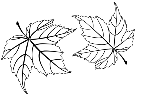 maple leaves coloring page free printable coloring pages