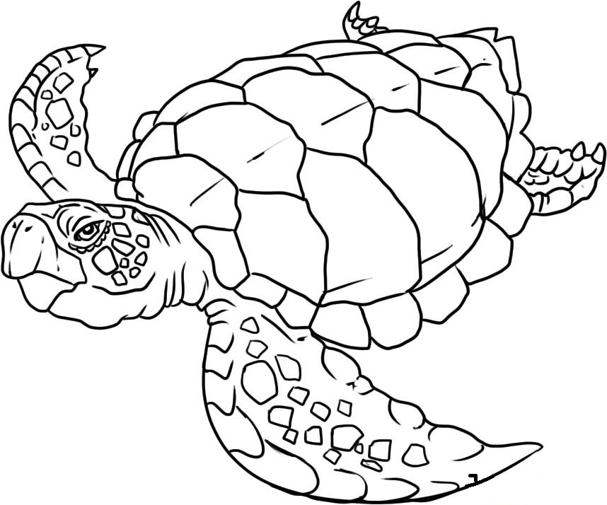 ocean animals coloring pages clip art library
