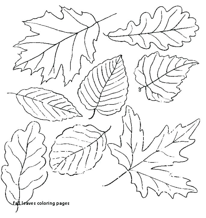 palm leaves coloring pages top5best