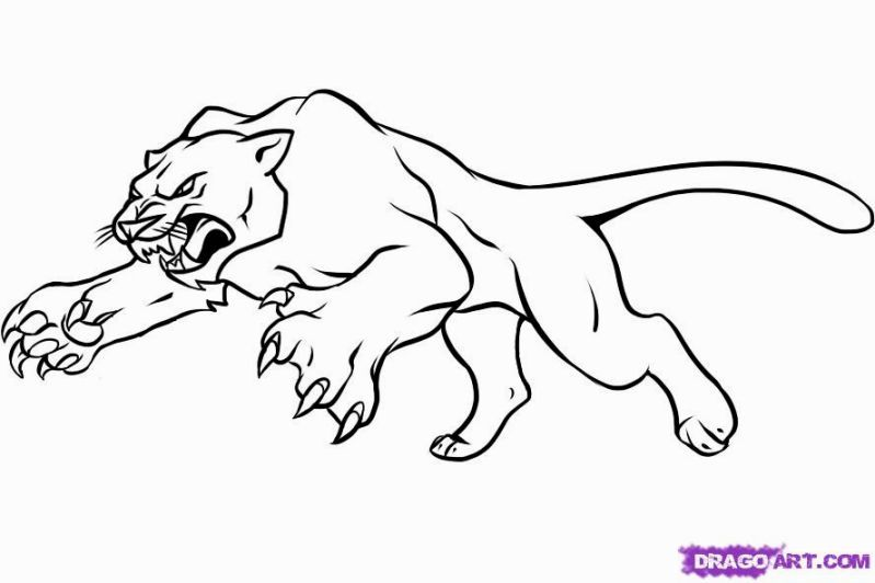 panther coloring pages black panther drawing animal