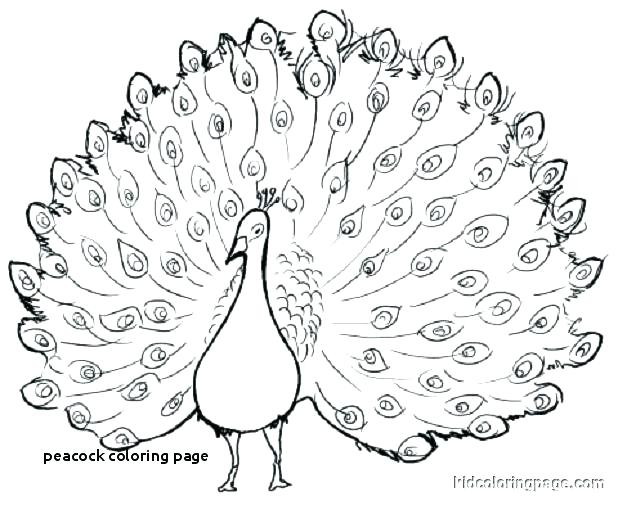 peacock coloring pages free builddirectory
