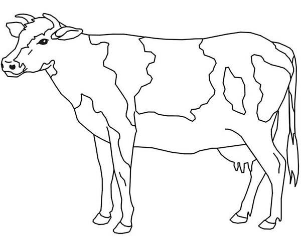 pin april on coloring cow coloring pages animal