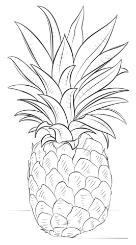 pineapple coloring page free printable coloring pages