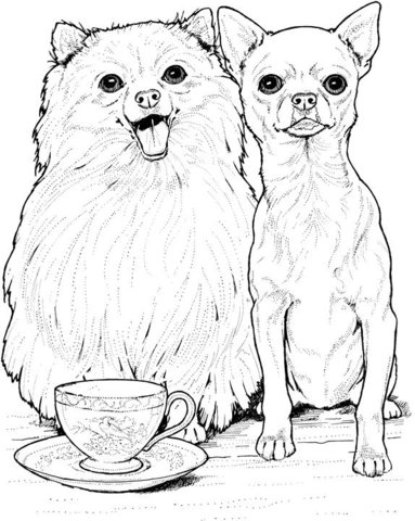 pomeranian dog and chihuahua coloring page free printable