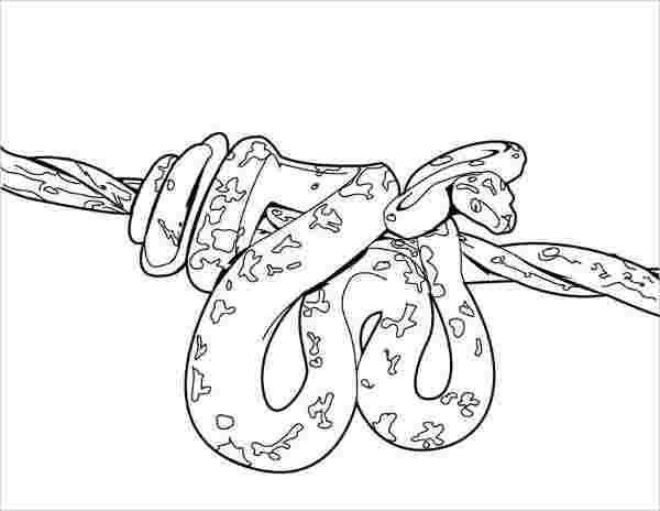 printable coloring pictures of snakes snake coloring pages