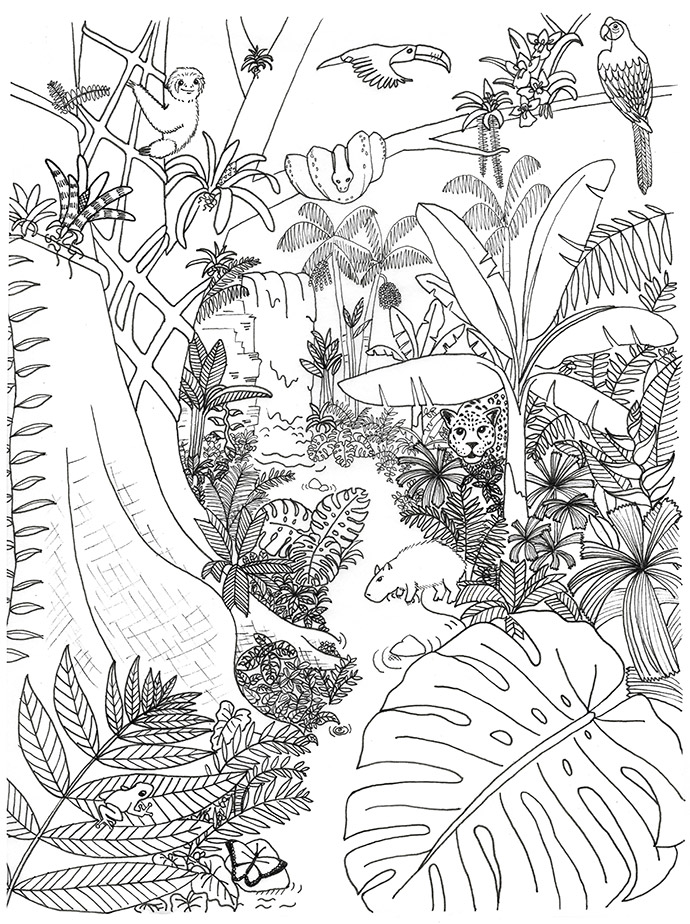 rainforest animals and plants coloring page rainforest
