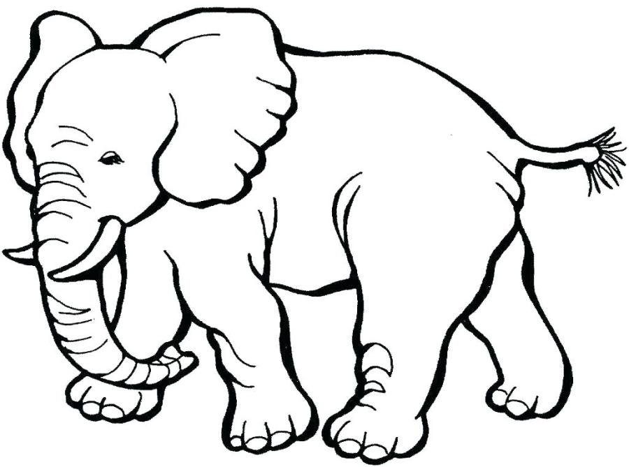 real animal coloring pages fireworks coloring pages pclove