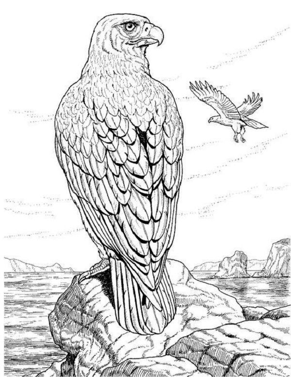 realistic animal coloring pages for adults vogel