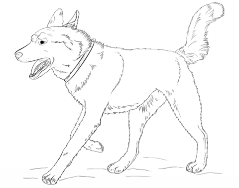 running siberian husky coloring page free printable