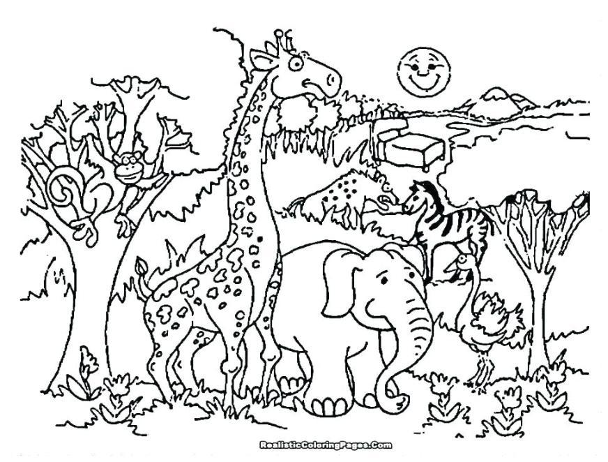 safari animal coloring pages sheets jungle animals sefoxclub