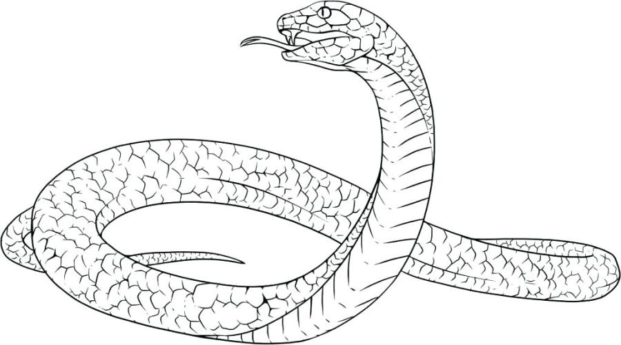scary snake coloring pages at getdrawings free for