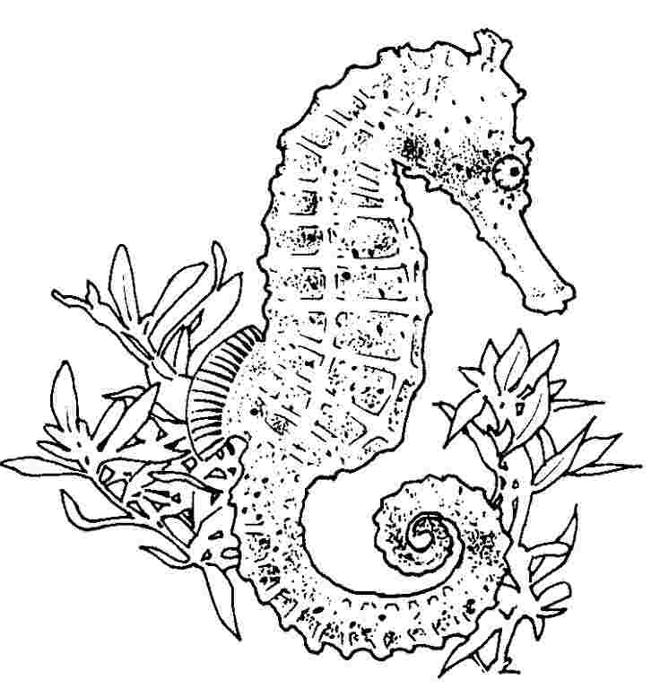 seahorse printable coloring pages free printable seahorse
