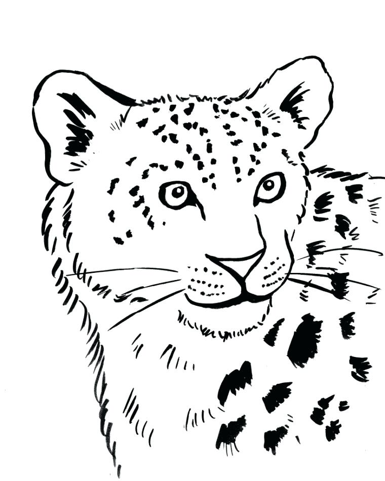 snow leopard coloring pages ba page medianav