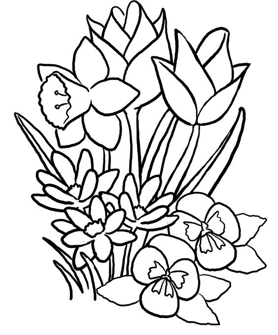 spring flowers coloring pages coloringme