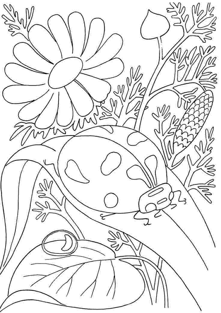 spring insects coloring pages spring flower coloring page
