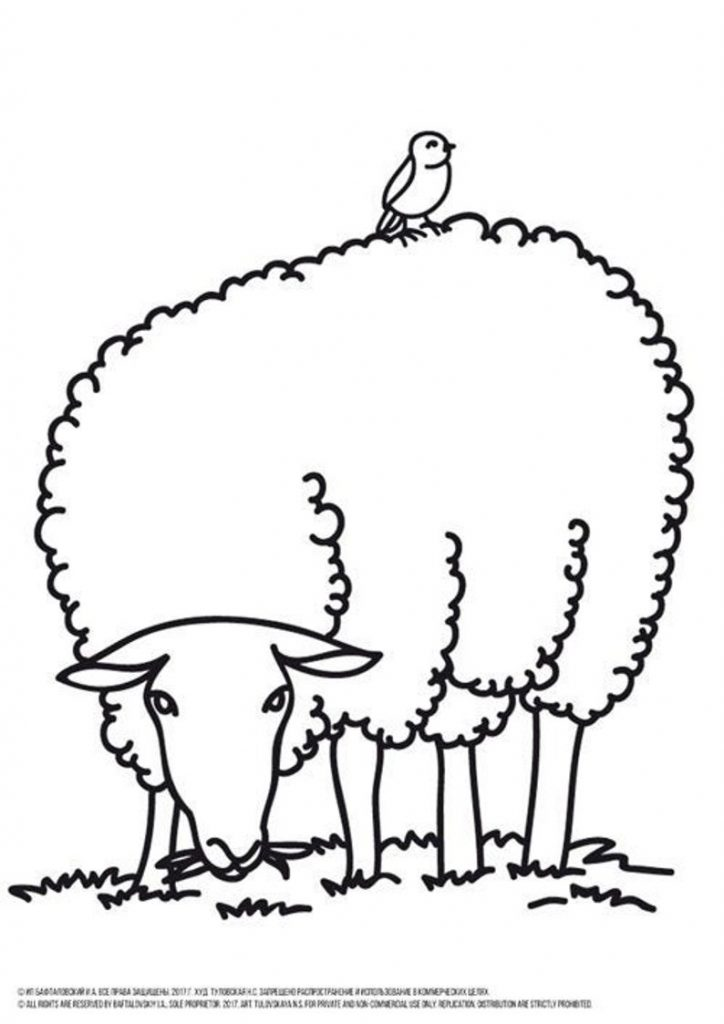 successful farm coloring pages pdf sheep page printable