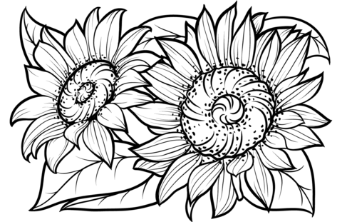 sunflowers coloring page free printable coloring pages