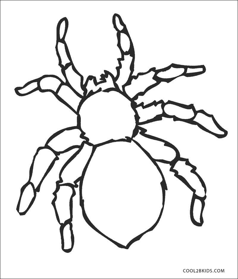 tarantula coloring page new photos free printable spider