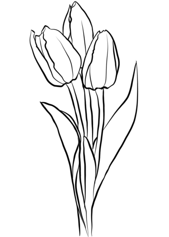 three tulips coloring page free printable coloring pages