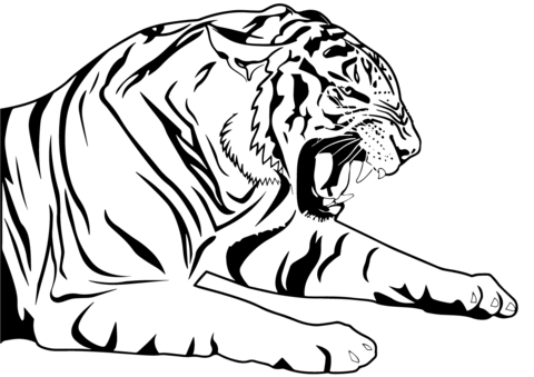 tiger coloring page free printable coloring pages
