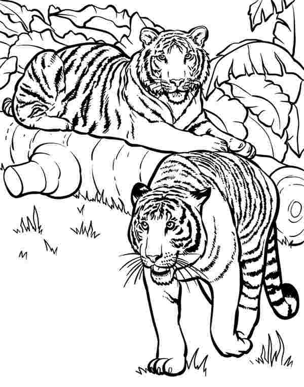 tiger coloring pages online free tiger coloring pages