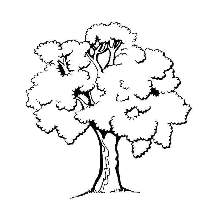 trees to print for free trees kids coloring pages