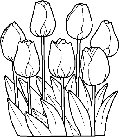 tulip coloring pages at getdrawings free for personal