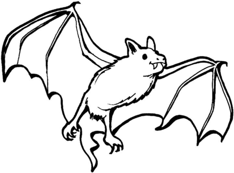vampire bat coloring page free printable coloring pages