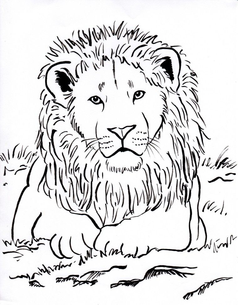week 3 upside down lots of animal coloring pages lion
