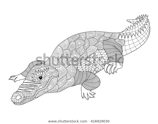 zentangle crocodile coloring pages adults children stock
