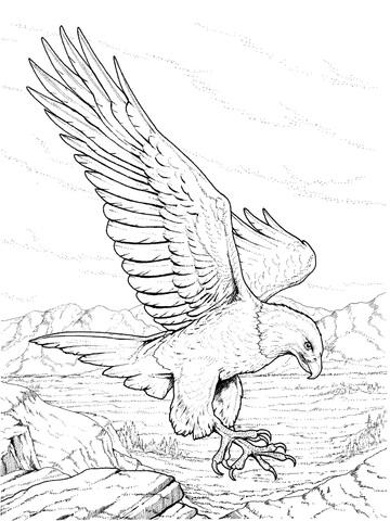 ausmalbild nordamerikanischer weikopfseeadlerm landet