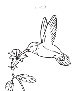 bird coloring pages playing learning