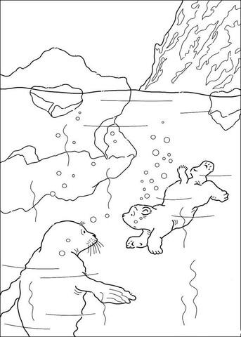 coloriage ours polaire qui nage avec un phoque