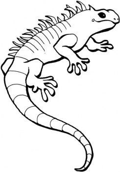 coloring pages lots of kinds lizards insects and spiders