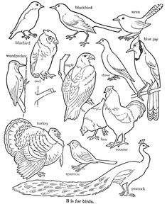 complicated design bird flock coloring page for teens or