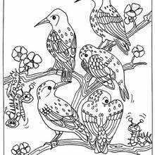 owl sitting on the tree coloring pages hellokids