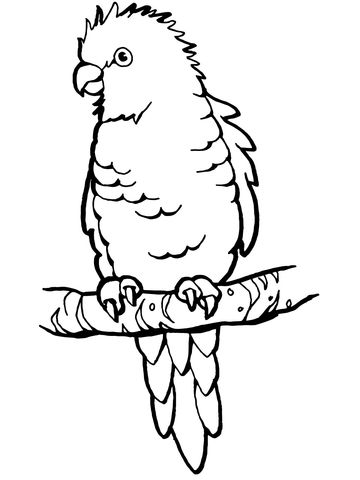 perched parrot coloring page from parrots category select