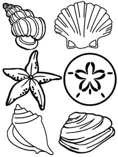 shell clip art black and white sand dollar coloring page