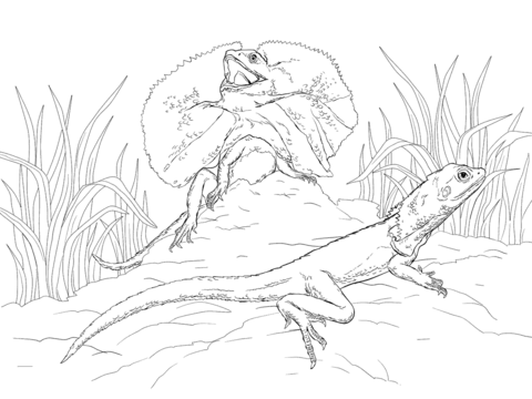 two frill necked lizards coloring page dragon coloring
