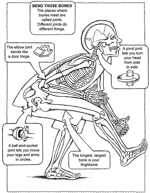 free coloring page from dover publications human body