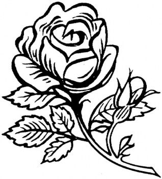 free coloring pages for adults beautiful big rose
