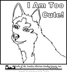 free printable husky pictures to color color me husky