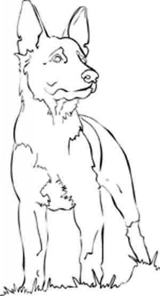 german shepherd face drawing at getdrawings free download