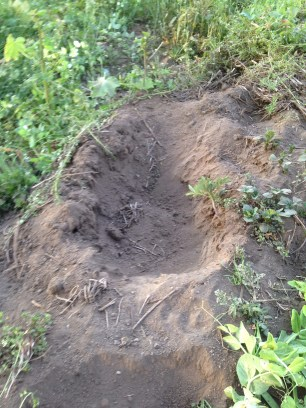 Elephant foot print in the bean garden
