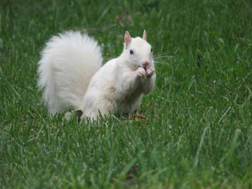 Heart of Brevard presents 15th annual White Squirrel Photography Contest
