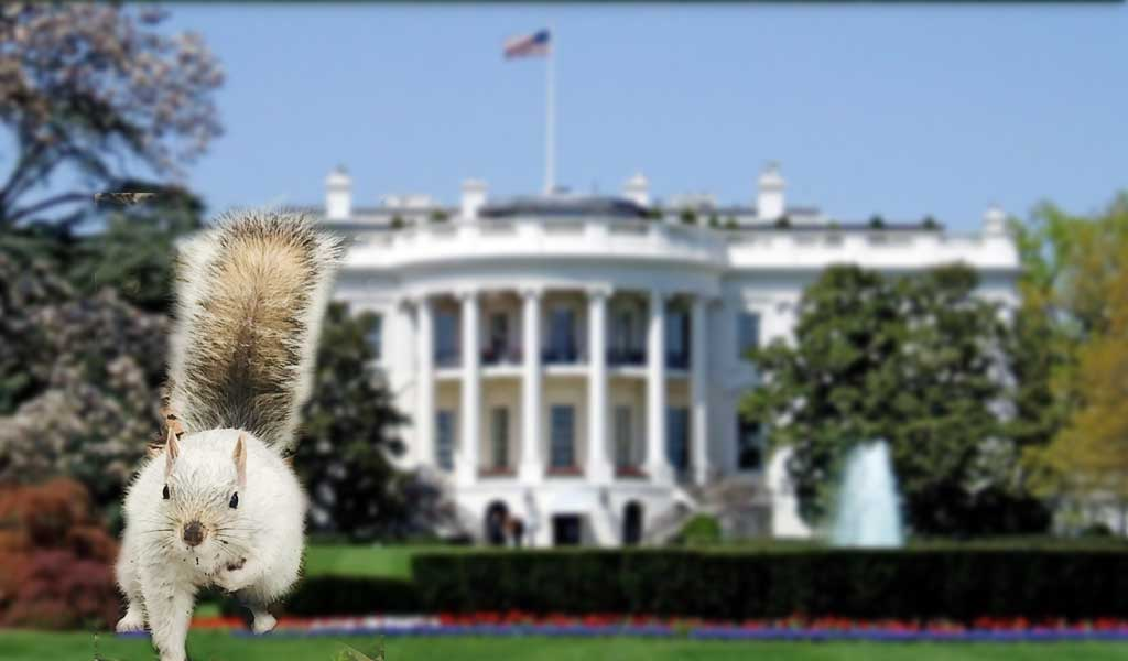 White Squirrel Sighting at the White House