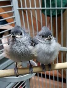 teenage-birds